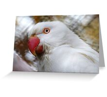 Are You Done Yet? - Ringneck Parrot - Gore NZ Greeting Card