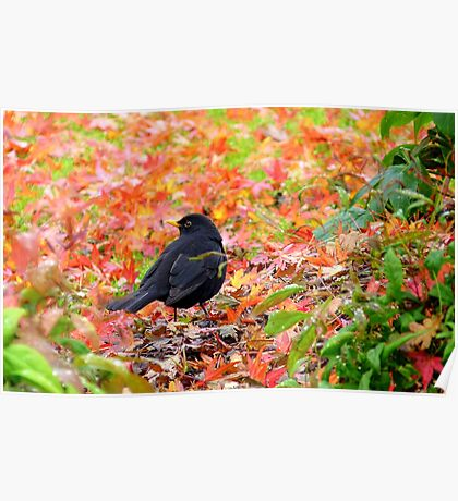 Autumn Rush! - Blackbird - Southland NZ Poster