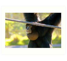 Hey I'm The Pro at Brachiating! - Siamang - Orana Wildlife Park CHC NZ Art Print