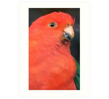 I Got A Twinkle In My Eye! King Parrot - Gore Gardens NZ Art Print