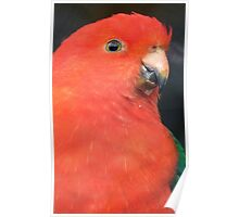 I Got A Twinkle In My Eye! King Parrot - Gore Gardens NZ Poster