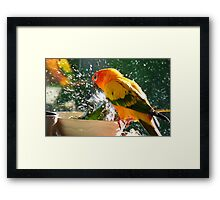 Please Bubbles!!, Let Me Have A Turn...! Sunconure - NZ Framed Print