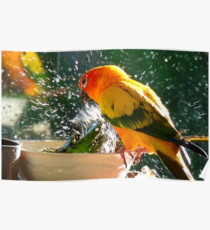 Please Bubbles!!, Let Me Have A Turn...! Sunconure - NZ Poster