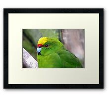 I Have A Snazzy Yellow & Red Cap! - Kakariki - NZ Framed Print