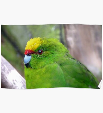 I Have A Snazzy Yellow & Red Cap! - Kakariki - NZ Poster