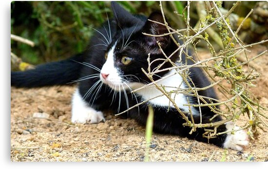 Aww!!..That One Got Away! - Spike Kitten - NZ by AndreaEL