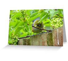Who Goes There! - Silvereye/Wax Eye NZ Greeting Card