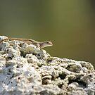 Lizard by Michelle Callahan