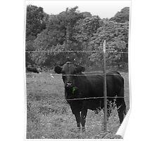 Cow on Hillside, Hana Poster