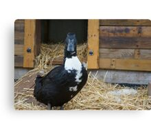 Good Morning Violet the Duck Canvas Print