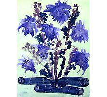 Ikebana Photographic Print