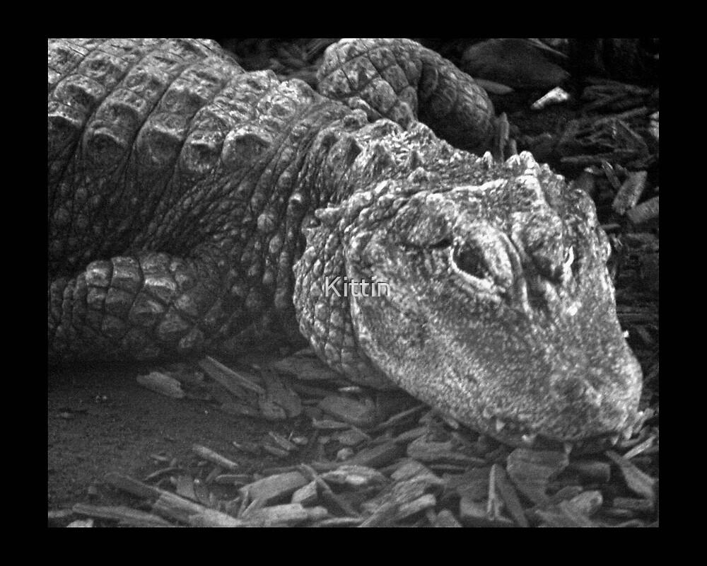 reptile 01 by Kittin