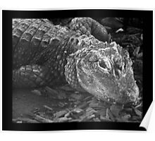 reptile 01 Poster