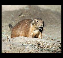 prairie dog 02 by Kittin
