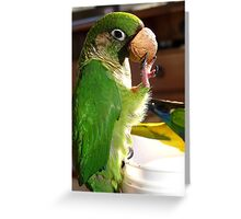 Is This A Good Muzzel! - Bubbles - Maroon-Bellied Conure - NZ Greeting Card
