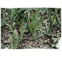 grass 01 Poster