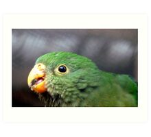 The King's Baby - Baby King Parrot - Gore Southland Art Print