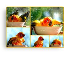The Joy of Bathing!! - Sunshine - Sun Conure - NZ Canvas Print