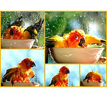 The Joy of Bathing!! - Sunshine - Sun Conure - NZ Photographic Print