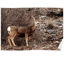 Mule Deer Doe - American Fork Canyon Poster