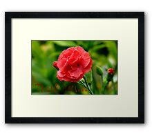 Thank you! - Red Carnation - Southland NZ Framed Print