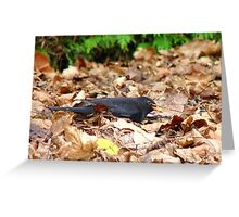 I'm Really Busy With House Work! - Blackbird Greeting Card