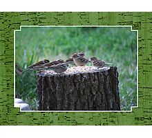 Lunch Time at the Tree Log Diner Photographic Print