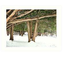 Snow and Trees Art Print
