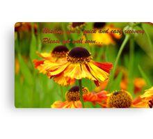 Get Well Soon - Greeting Card - Black Eyed Susan - Cone Flower - NZ Canvas Print