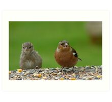 Hey!! Give Me A Wing up! - Chaffinch & Sparrow - NZ Art Print