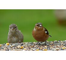 Hey!! Give Me A Wing up! - Chaffinch & Sparrow - NZ Photographic Print