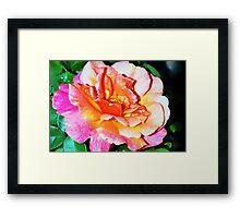 Rain splattered rose Framed Print