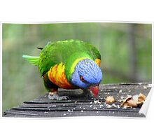 The Nutty Professor! - Rainbow Lorikeet - NZ Southland Poster