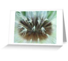Damp Dandelion Clock Greeting Card