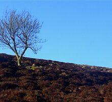 One Tree Hill by Karen Harding