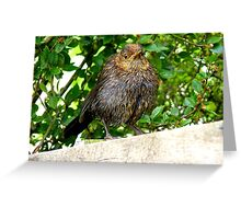 I'll Dry Off With A Little Help From The Sun!! - Juvenile Blackbird - NZ Greeting Card