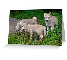 Arctic Wolf Pup Trio  Greeting Card