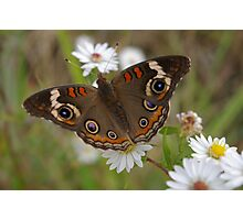 Eyed Butterfly Photographic Print