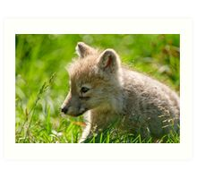 Just smelling the flowers _ Arctic Wolf Pup Art Print