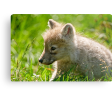 Just smelling the flowers _ Arctic Wolf Pup Metal Print