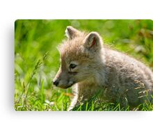 Just smelling the flowers _ Arctic Wolf Pup Canvas Print