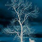 Winter by sootycat669
