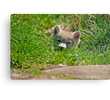 Who Me?? Arctic Wolf Pup Metal Print