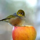 If This Is The Big Apple, I Must Be King Kong! - Silvereye - NZ by AndreaEL