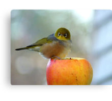 If This Is The Big Apple, I Must Be King Kong! - Silvereye - NZ Canvas Print