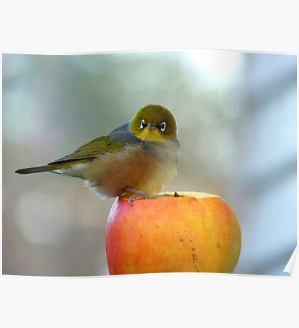 If This Is The Big Apple, I Must Be King Kong! - Silvereye - NZ Poster
