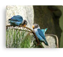 Bendy Branch ...Big Behind ... Surely Not? - Masked Lovebirds - NZ Canvas Print
