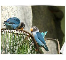 Bendy Branch ...Big Behind ... Surely Not? - Masked Lovebirds - NZ Poster
