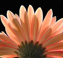 Flower Wings by Elaine Harriott