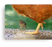 Pleeeese! Don't Step On Me!! - I'm Only Little! - Sparrow - NZ Canvas Print